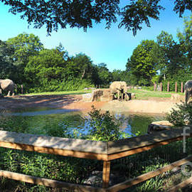 Gary Gingrich Galleries - Elephant Pano - KC Zoo