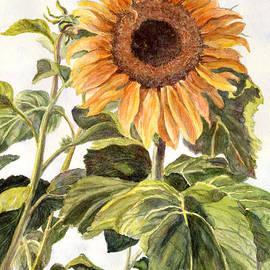 Malanda Warner - Elephant Sunflower