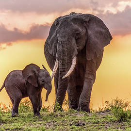 Janis Knight - Elephants at Sunset