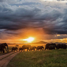 Liran Eisenberg - Elephants at Sunset