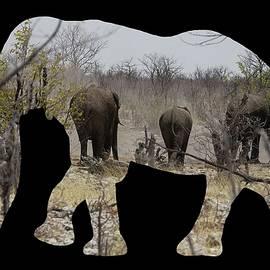 Ernie Echols - Elephants in Namibia