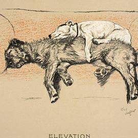 Elevation - Cecil Charles Windsor Aldin