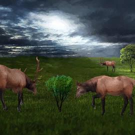 Ericamaxine Price - Elk in the Field
