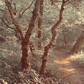 Jenny Rainbow - Elvish Forest. Nature in Alien Skin
