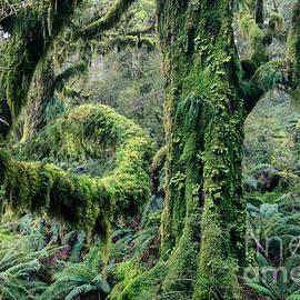 Matteo Colombo - Enchanted forest - Fiordland National Park - New Zealand