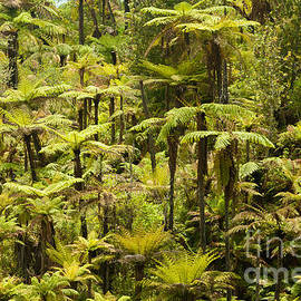Stephan Pietzko - Endemic New Zealand tree fern forest wilderness