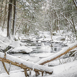 Bill Wakeley - Enders State Forest