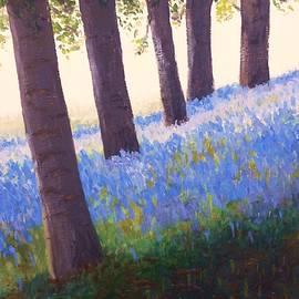 English Bluebells at Sunrise