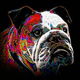 Alexey Bazhan - English Bulldog