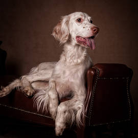 Tanya Kozlovsky - English setter...
