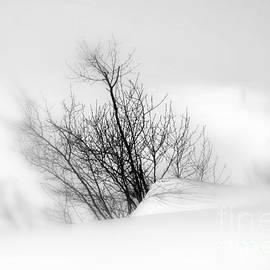 Elfriede Fulda - Essence of Winter