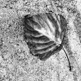 Tom Druin - Essential ...black And White