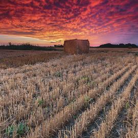 Essex Hay at Sunrise - Cale Best