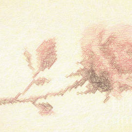 Linda Phelps - Etched red Rose