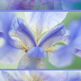 Jenny Rainbow - Ethereal Life of Iris. Vertical Triptych