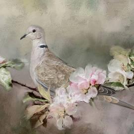 Jai Johnson - Eurasian Dove In The Garden