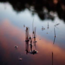 Jouko Lehto - European toad evening swim