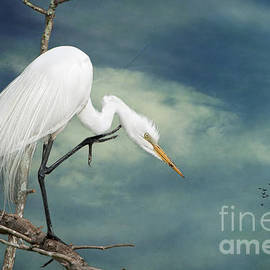 Bonnie Barry - Evangeline Parish Egret