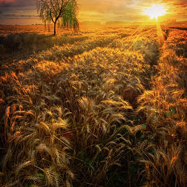 Debra and Dave Vanderlaan - Evening Wheat Fields