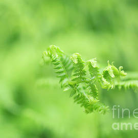 Charmian Vistaunet - Evolution of a Fern