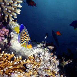 Johanna Hurmerinta - Exciting Red Sea World