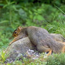 LeeAnn McLaneGoetz McLaneGoetzStudioLLCcom - Exhausted Hot Squirrel