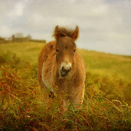 Carla Parris - Exmoor Wild Pony
