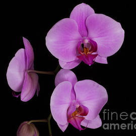 TN Fairey - Exotic Orchids