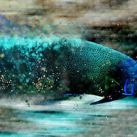 Ericamaxine Price - Exploding Fish