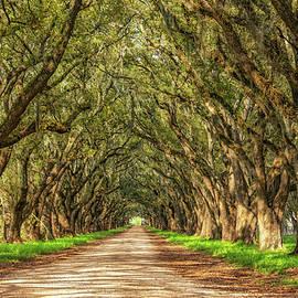 Steve Harrington - Exploring Louisiana