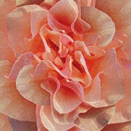Michele Avanti - Expressionist Rose