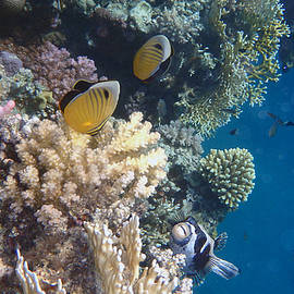 Exquisity in the Red Sea