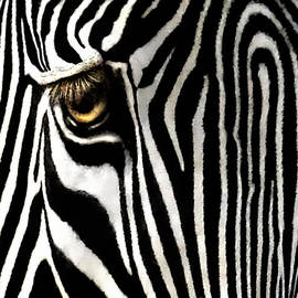 Jennie Breeze - Eye of a Zebra