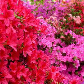 Bruce Nutting - Fabulous Flowers