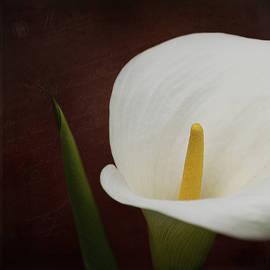 Jordan Blackstone - Faith - Flower Art