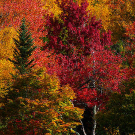 Dan Beauvais - Fall Colors 8743