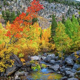 Lynn Bauer - Fall Colors Along Bishop Creek