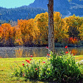 Lynn Bauer - Fall Colors and Poppies at the Pond