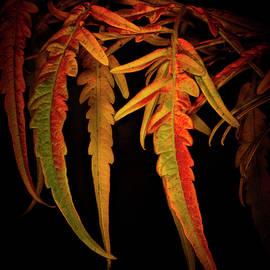 Robert Storost - Fall Colors