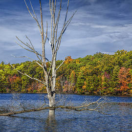 Randall Nyhof - Fall Dead Tree Stickup in Michigan Lake