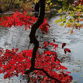 Donna Cook - Fall Foliage Vibrancy