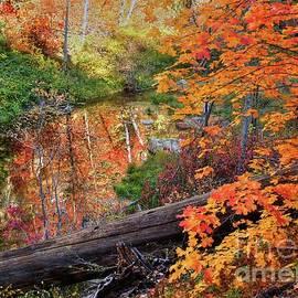 K D Graves - Fall In Oak Creek Canyon