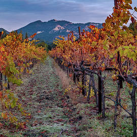 Bill Gallagher - Fall in Wine Country