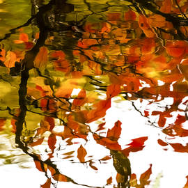 Tracy Winter - Fall Reflections