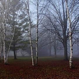 Debbie Oppermann - Fall Walk In The Fog