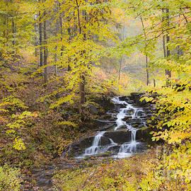 Alan L Graham - Fall Woodland Waterfall