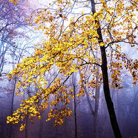Fall Yellows in the Forest