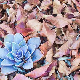 Ram Vasudev - Fallen Autumn Leaves