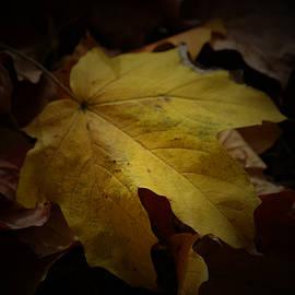 Richard Andrews - Fallen
