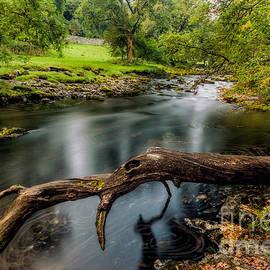 Adrian Evans - Fallen Tree